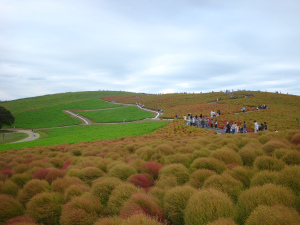 Hitachi Seaside Park 1.jpg