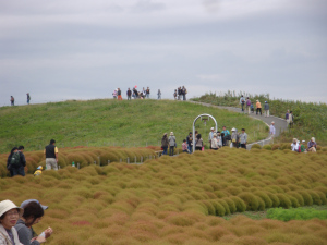 Hitachi Seaside Park 3.jpg