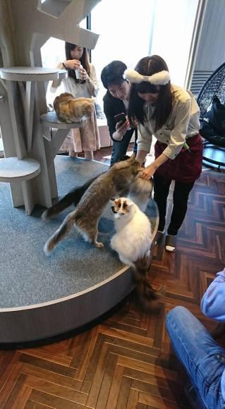 Cat Cafe 3