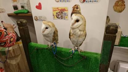 Owls 1